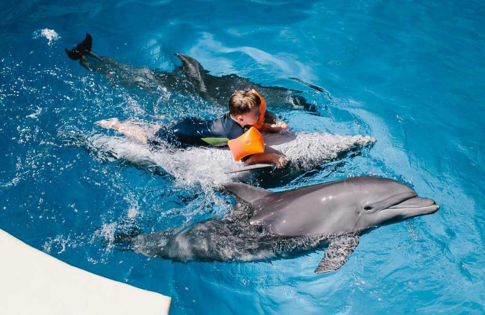 дельфинотерапия при аутизме