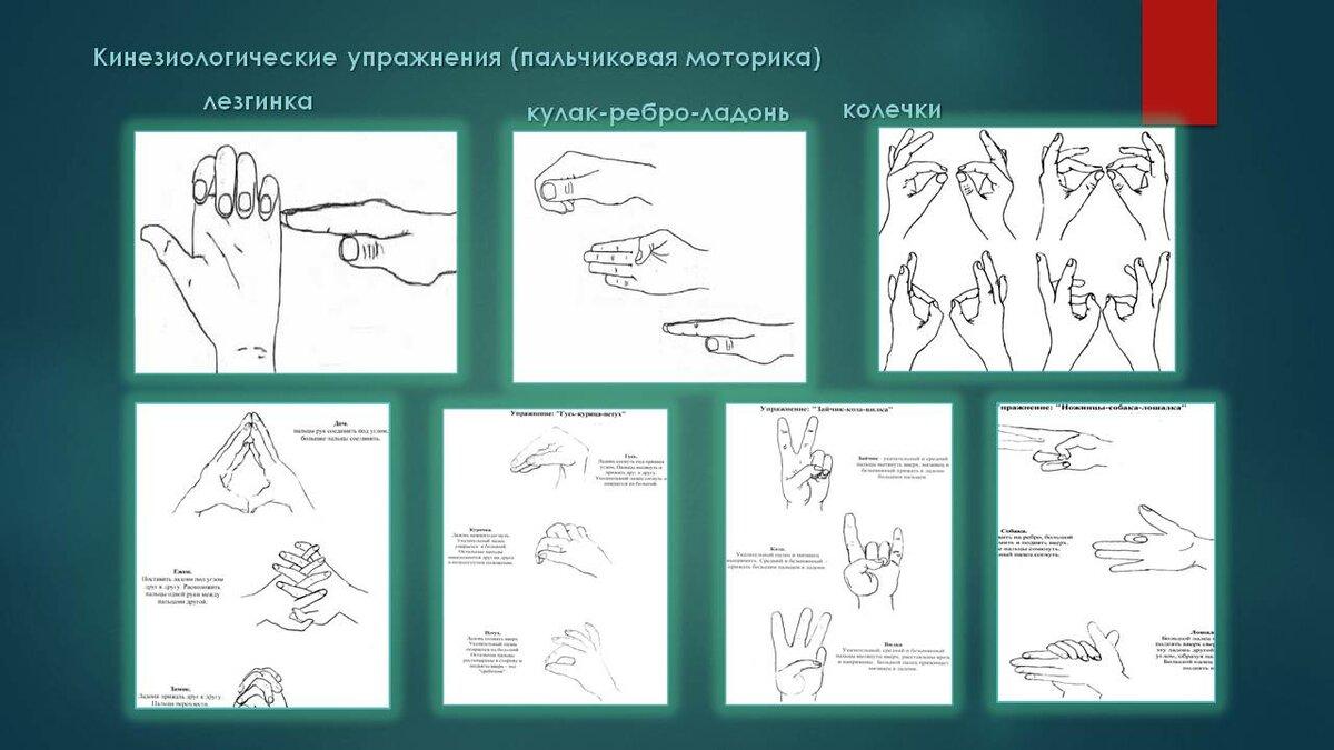кинезиологические упражнения для дошкольников с речевыми нарушениями